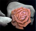 carvedrose